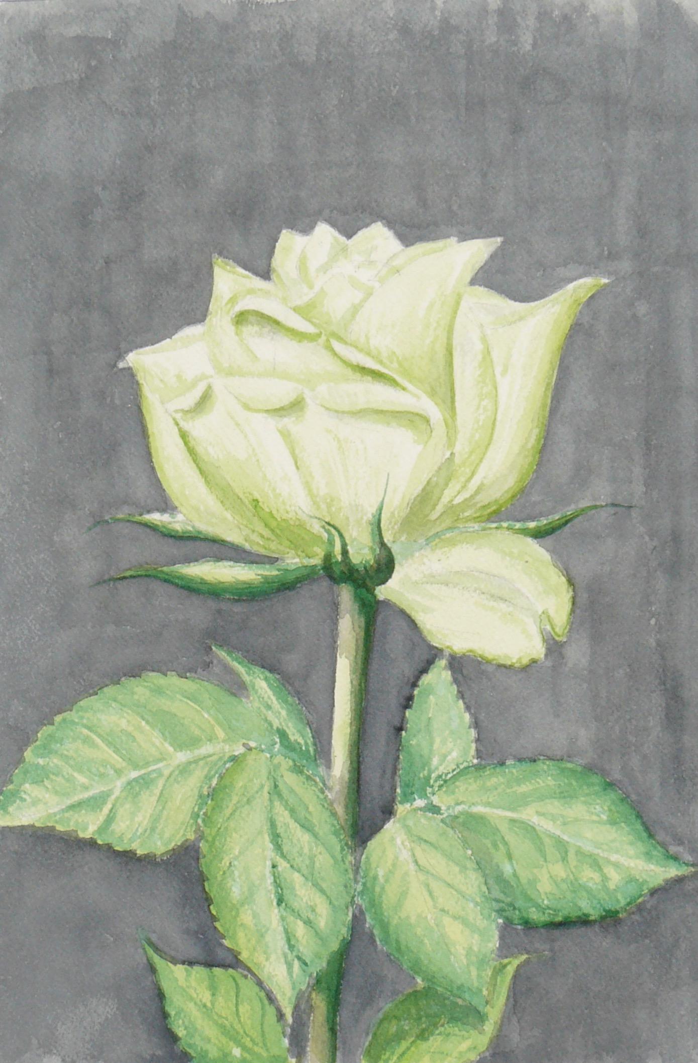 2008-005 witte roos