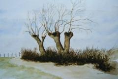1998-005 Knotwilgen